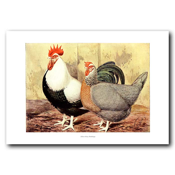 Fine art print for sale. Silver-Grey Dorking Rooster and Hen