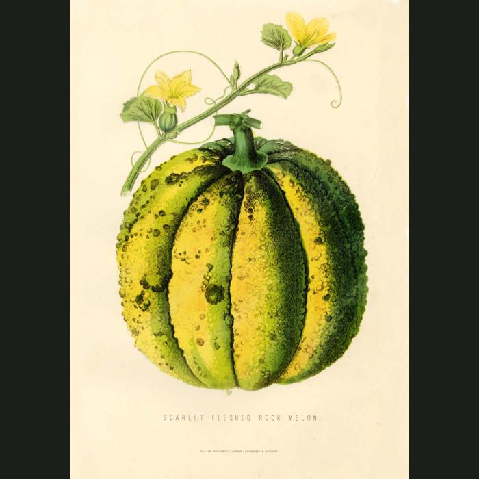 Fine art print for sale. Rock Melon