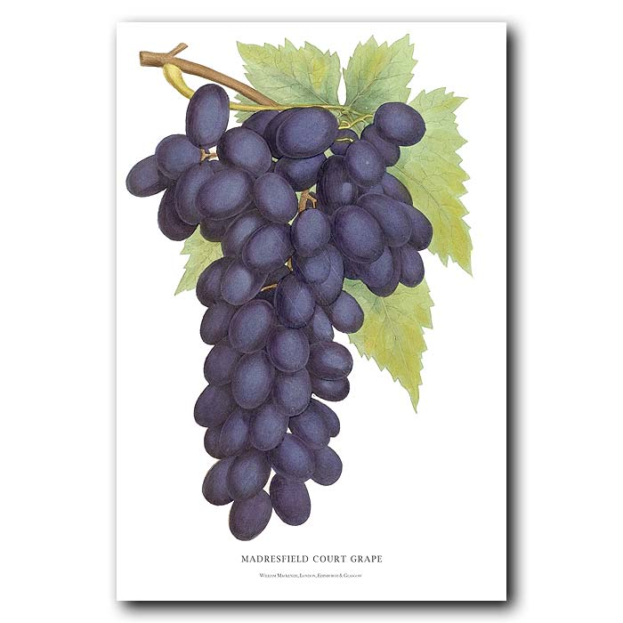 Fine art print for sale. Black Grapes