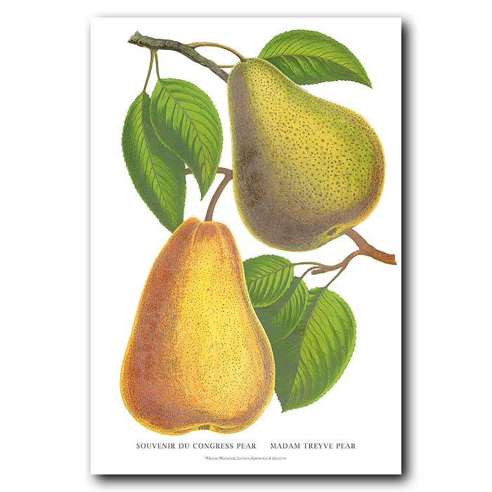 Fine art print for sale. French Pears
