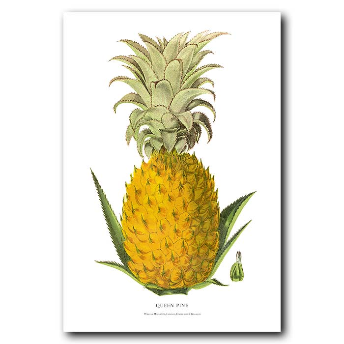 Fine art print for sale. Queen Pineapple