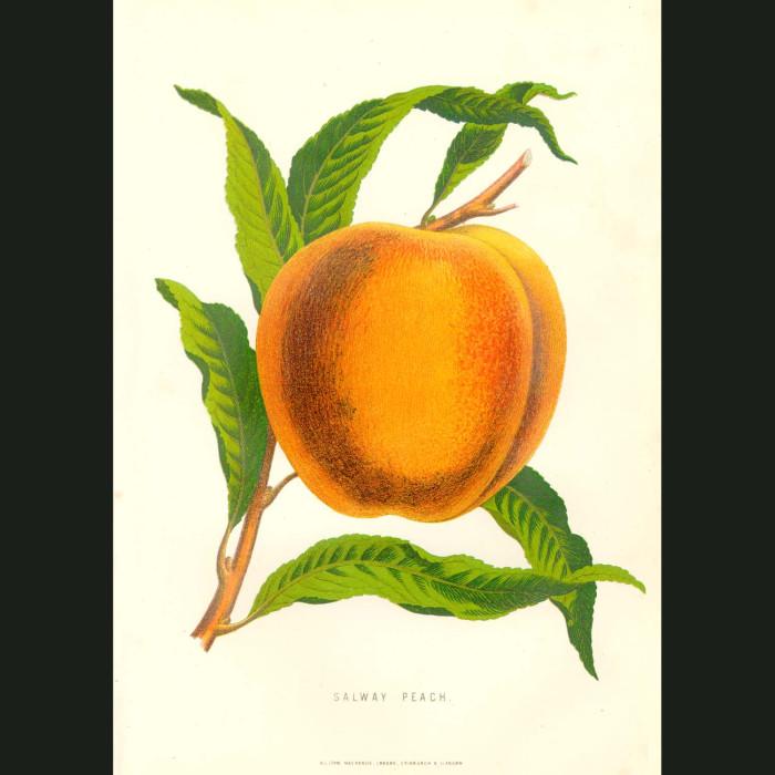Fine art print for sale. Salway Peach