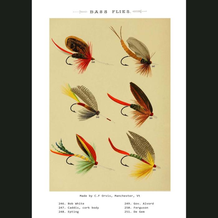 Fine art print for sale. Bass Fishing Flies (III)