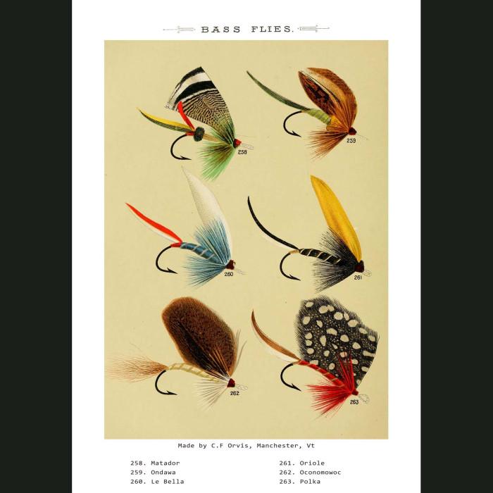 Fine art print for sale. Bass Fishing Flies (V)