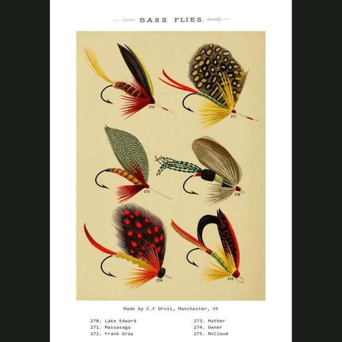 Fine art print for sale. Bass Fishing Flies (VII)