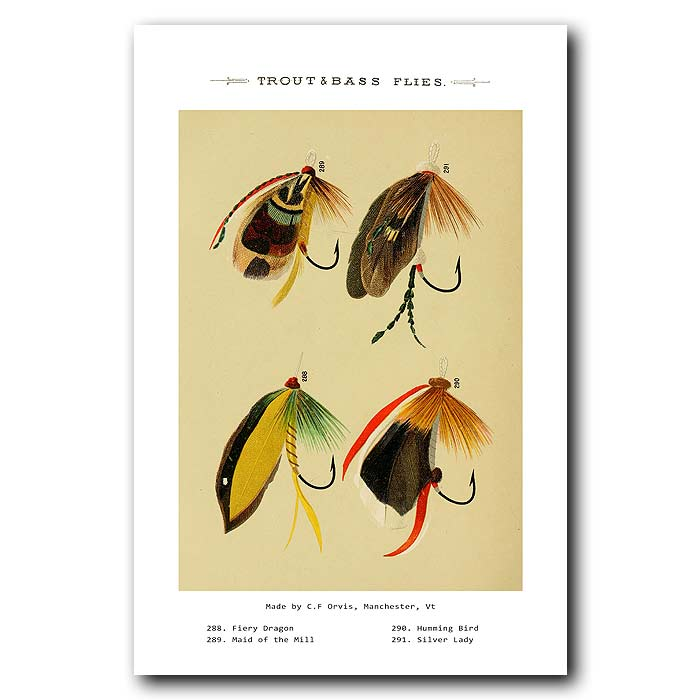 Fine art print for sale. Trout And Bass Fishing Flies
