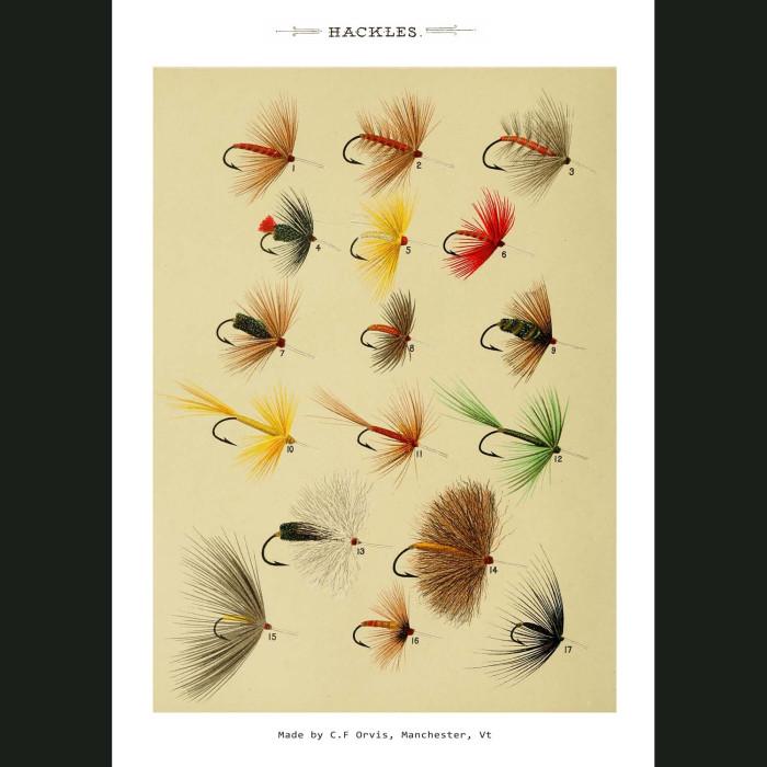 Fine art print for sale. Hackle Fishing Flies