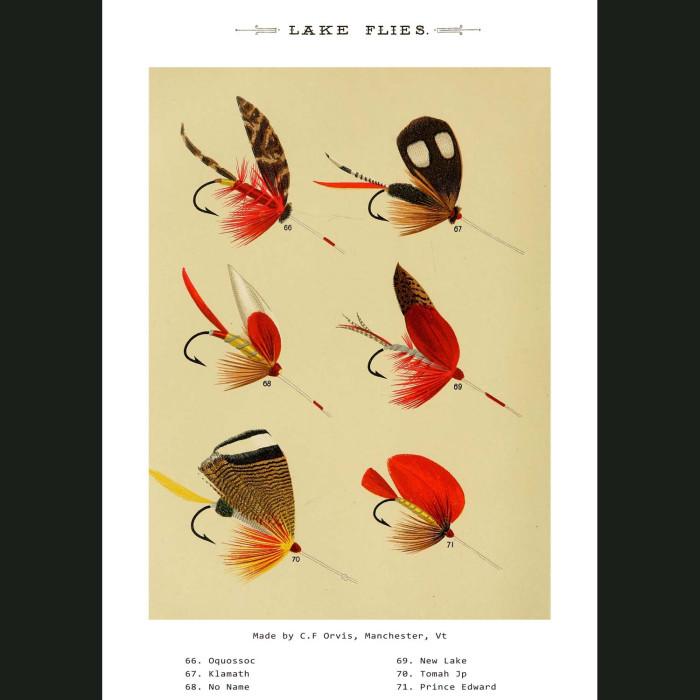 Fine art print for sale. Lake Fishing Flies (VI)
