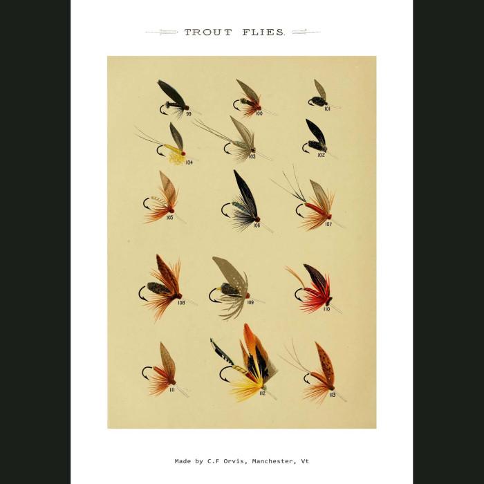Fine art print for sale. Trout Fishing Flies (II)