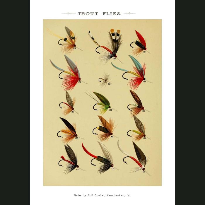 Fine art print for sale. Trout Fishing Flies (VI)