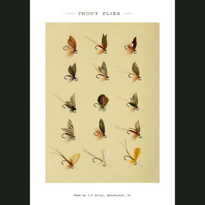 Fine art print for sale. Trout Fishing Flies (VII)