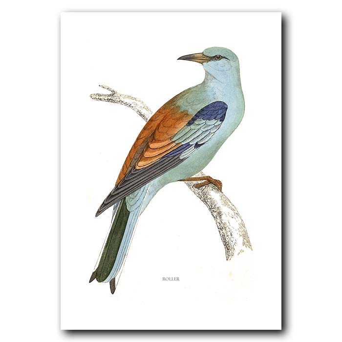 Fine art print for sale. Lilac-Breasted Roller