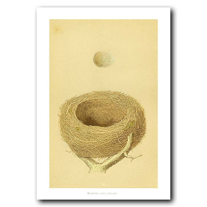 Fine art print for sale. Redwing Nest And Egg