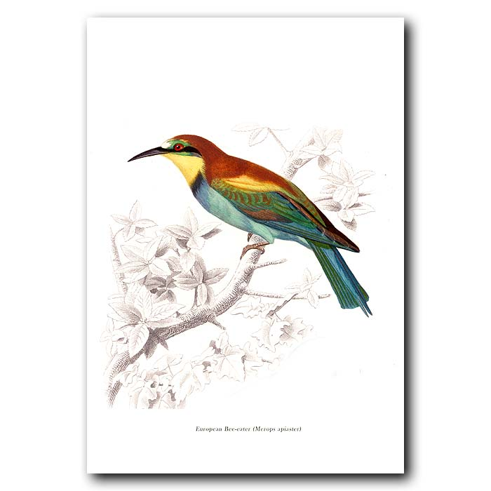 Fine art print for sale. Bee Eater Bird