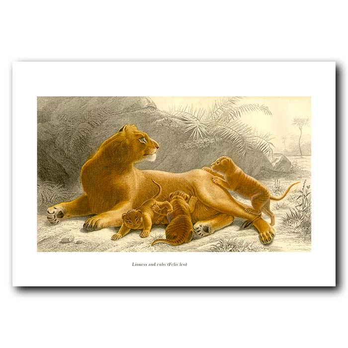 Fine art print for sale. Lioness And Cubs