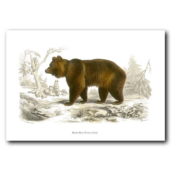 Fine art print for sale. Grizzly Bear