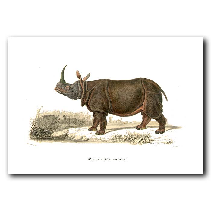 Fine art print for sale. Indian Rhinoceros