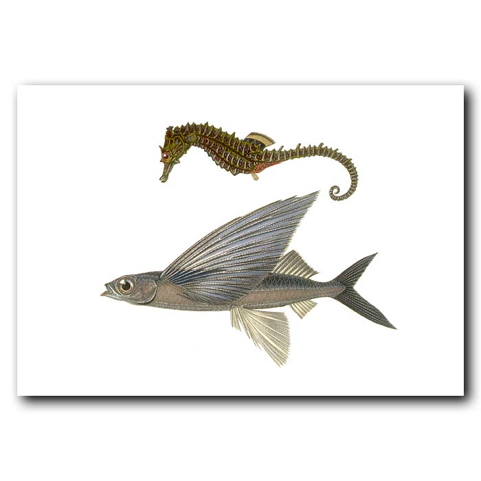 Fine art print for sale. Sea Horse And Flying Fish