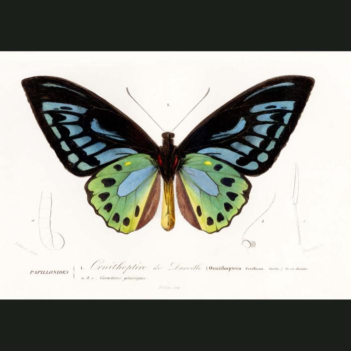 Fine art print for sale. Bird Wing Butterfly