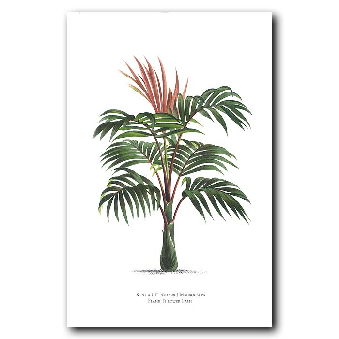 Fine art print for sale. Flame Thrower Palm Tree