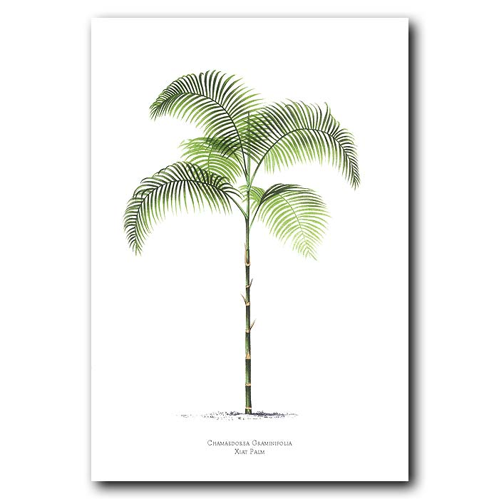Fine art print for sale. Xiat Palm Tree