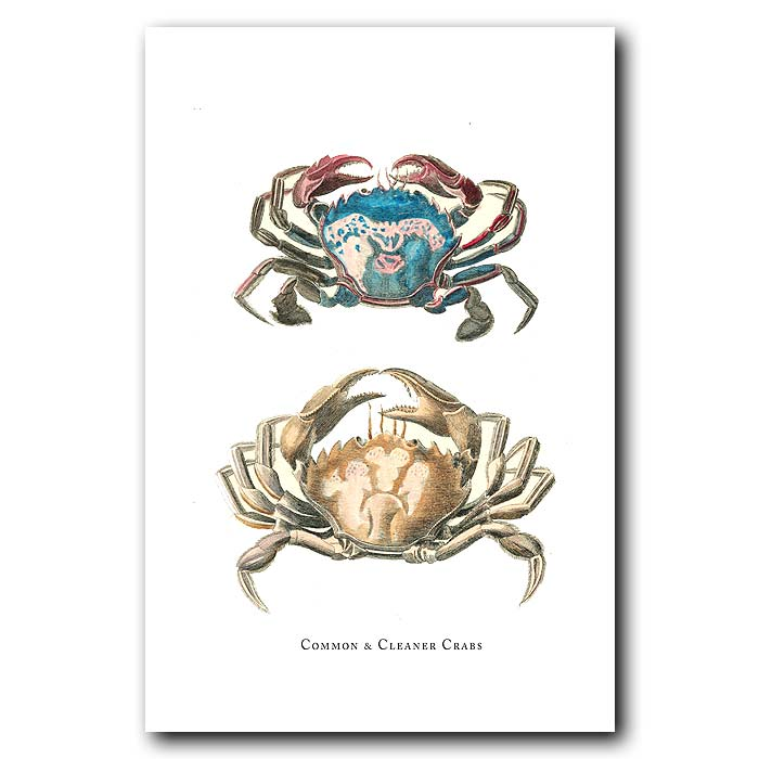 Fine art print for sale. Common And Cleaner Crabs