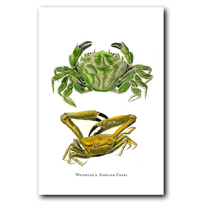 Fine art print for sale. Wrinkled And Angular Crabs