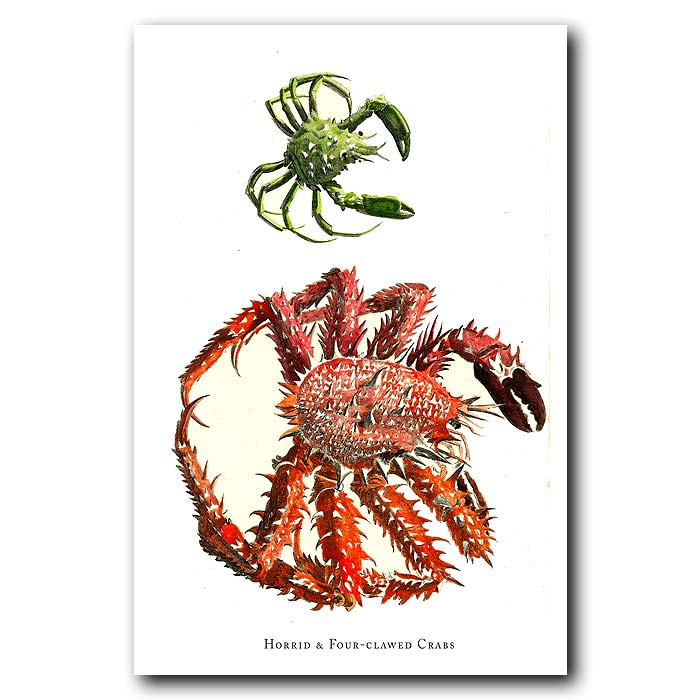 Fine art print for sale. Horrid And Four-Clawed Crabs