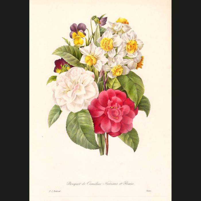 Fine art print for sale. Camellias, Narcissi & Pansies