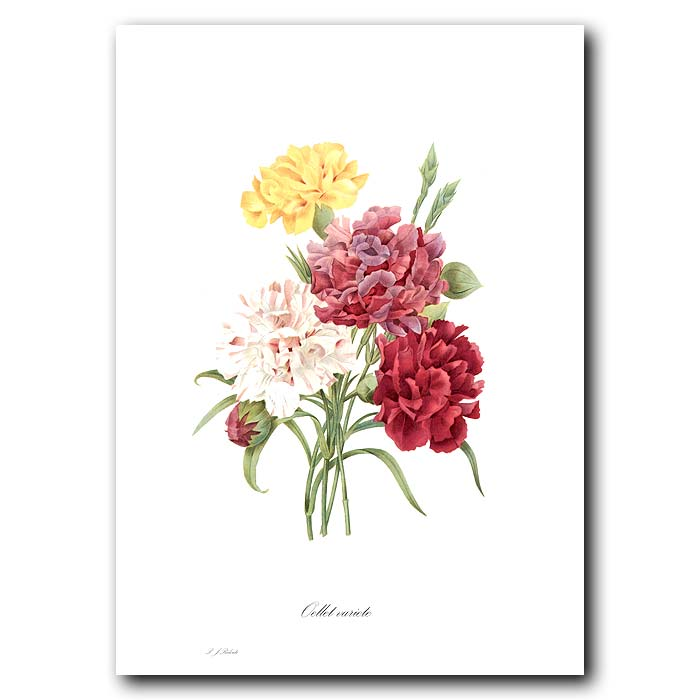 Fine art print for sale. Bouquet Of Carnations
