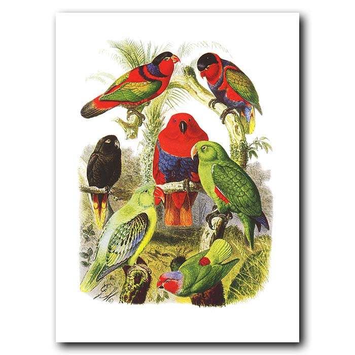 Fine art print for sale. Lories And Parakeets From South America