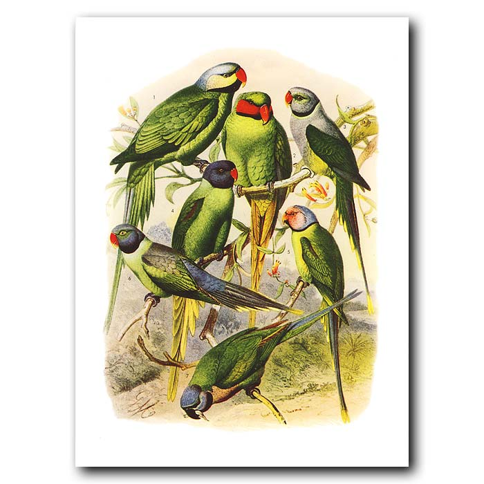 Fine art print for sale. Asian Parakeets