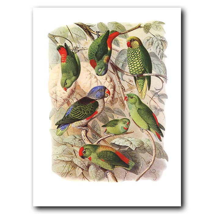 Fine art print for sale. Hanging Parakeets And Lories