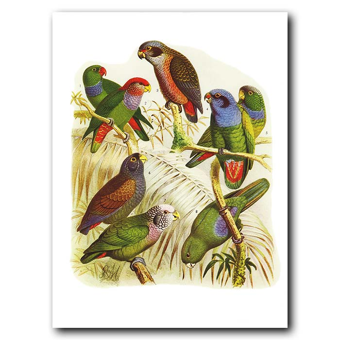 Fine art print for sale. South American Parrots