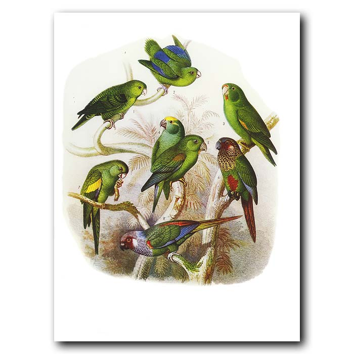 Fine art print for sale. Lovebirds
