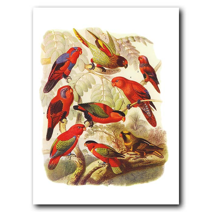 Fine art print for sale. Lory Parrots From Papua New Guinea