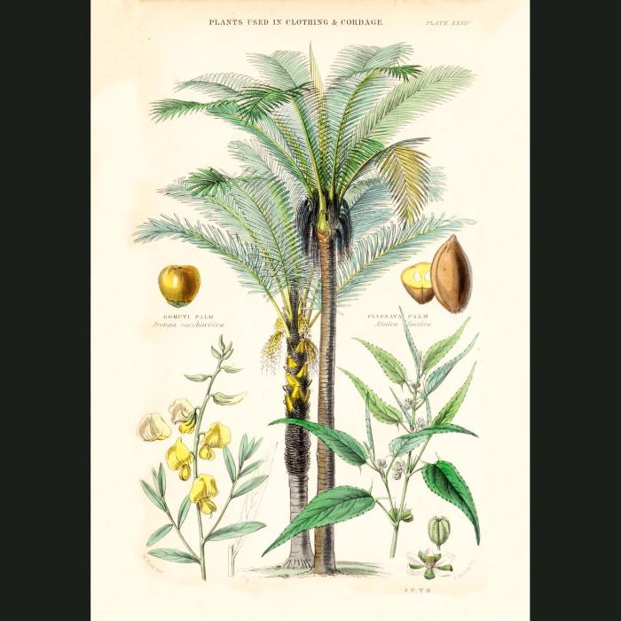 Fine art print for sale. Hemp, Jute, Gamuti & Passava Palms