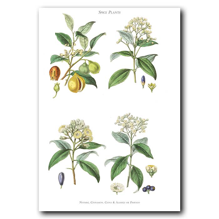 Fine art print for sale. Nutmeg, Cinnamon, Clove & Allspice