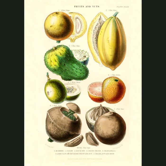 Fine art print for sale. Pawpaw, Soursop, Peach & Brazil Nuts