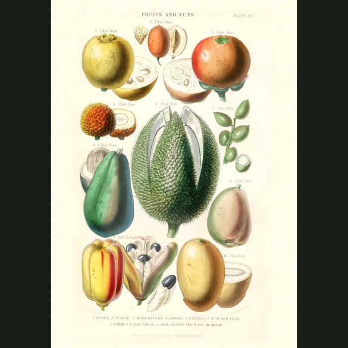 Fine art print for sale. Guava, Pistachio, Avocado & Mango