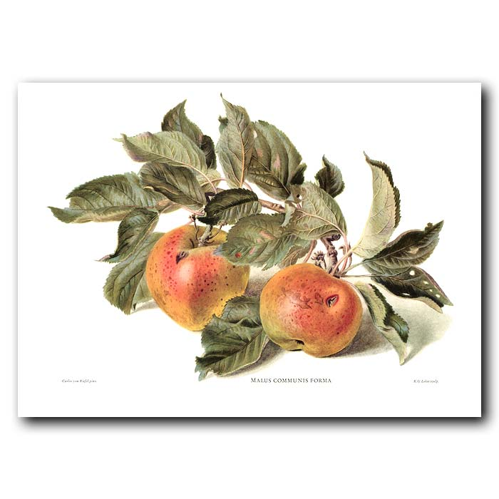 Fine art print for sale. Rosy Apples