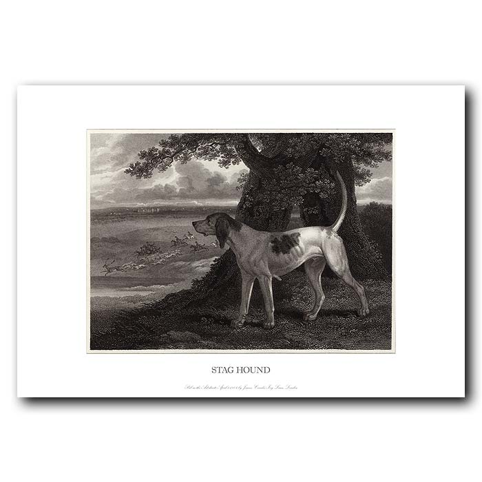 Fine art print for sale. Staghound