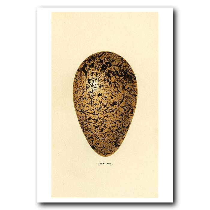 Fine art print for sale. Great Auk Egg (II)