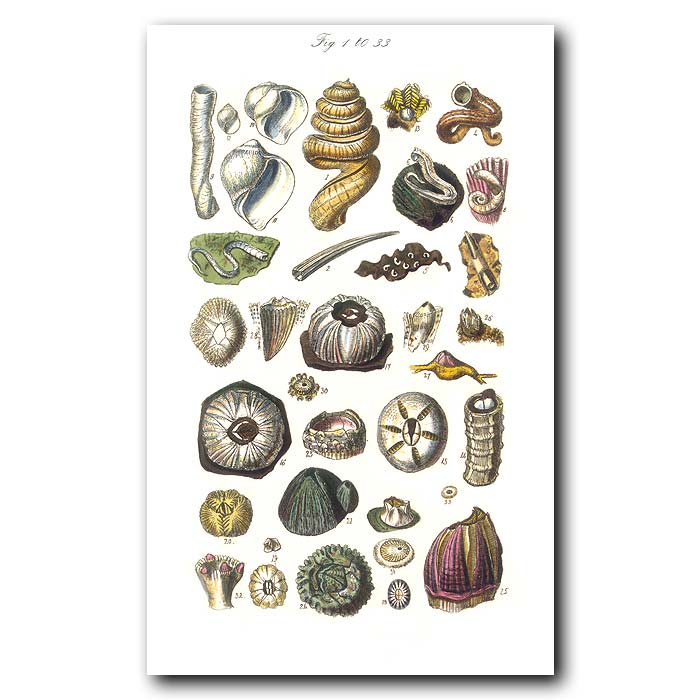 Fine art print for sale. Barnacle & Seashells
