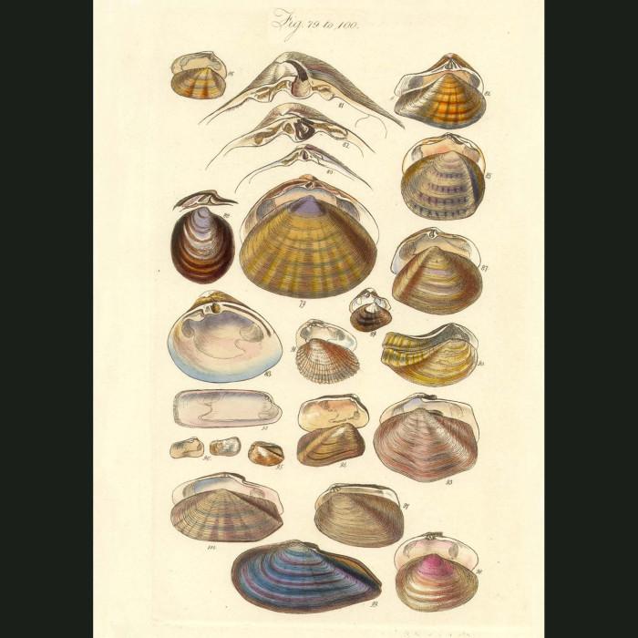 Fine art print for sale. Clam Seashells (II)