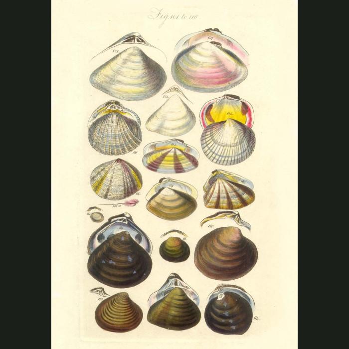 Fine art print for sale. Clam Seashells
