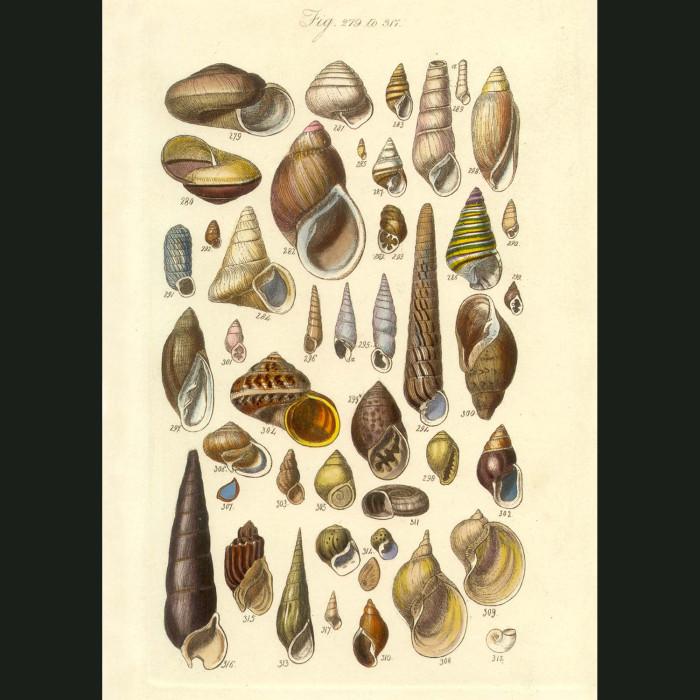 Fine art print for sale. Clam & Scallop Seashells