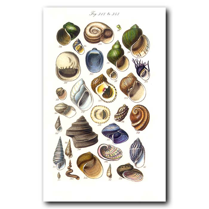 Fine art print for sale. Colourful Seashells