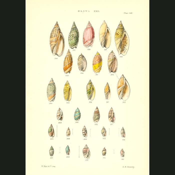 Fine art print for sale. Olive Seashells (IV)