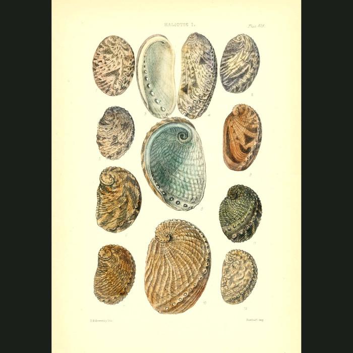 Fine art print for sale. Abalone Seashells (II)